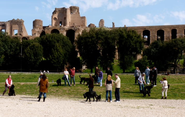 Circo massimo dogs owners Ben Hur Rome Italy