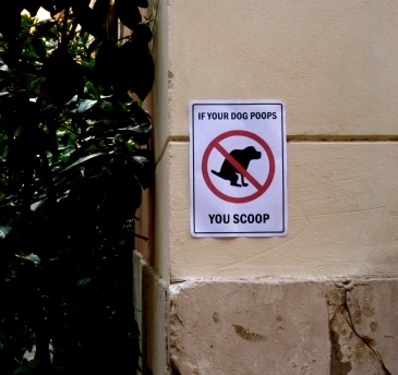 Rome Dog Poop Shit Animal lovers Italy scoop