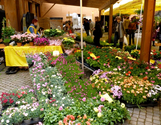 Rome farmers' market circo massimo central italy flowers and plants