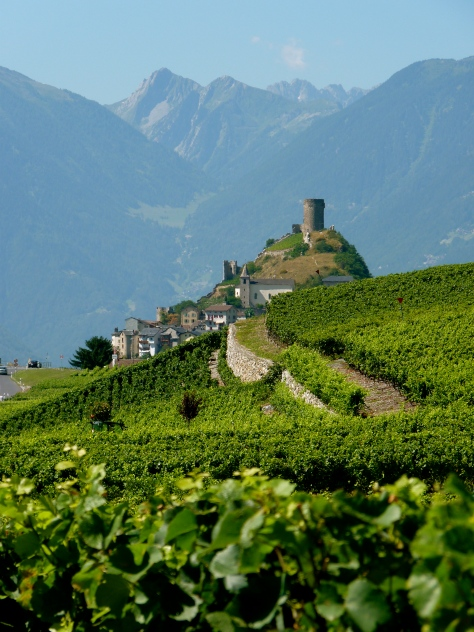 Swiss cheese wine producer vines